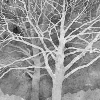 Whisper in Black and White Art Prints & Posters by Hailey E. Herrera Watermedia