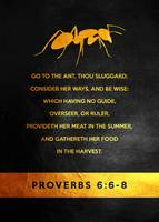 Proverbs 6:6-8 Bible Verse
