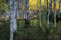 Aspen Attraction