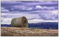 Bale of Hay in Annapolis Valley