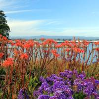 West Cliff Flowers Art Prints & Posters by Susan Kessler