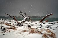 Winter Snow at the Indian River Inlet