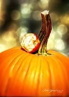Pumpkin With Chewed Apple Bokeh by Robin Amaral