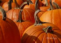Pumpkin Batch Macro by Robin Amaral