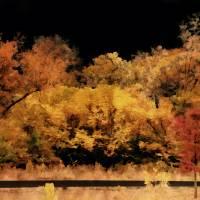 Autumn Night by Through The Split Window