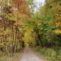 Autumn Trail by Through The Split Window