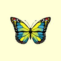 Blue and yellow butterfly