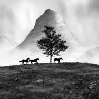 The Three Horses Art Prints & Posters by Nina Bradica