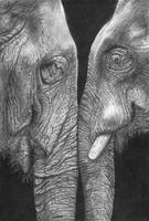 Eye to Eye elephant drawing