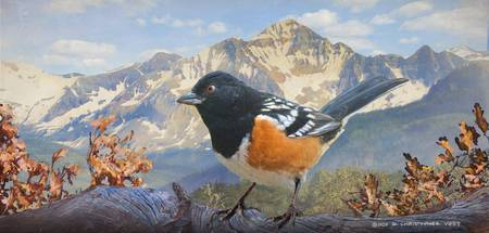 towhee in the mountains