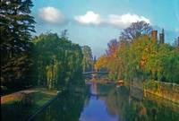 Backs in Autumn 12 by Priscilla Turner