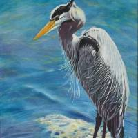 Blue-Heron-Fishing Art Prints & Posters by Don Griffith