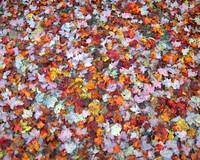 Fall Leaf Carpet