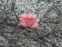 Pink flower and pebbles with roots