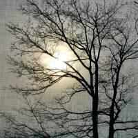 Black Tree White Sun by Through The Split Window