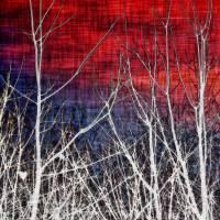 Tie Dye Sky with Trees by Through The Split Window