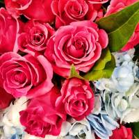 Roses and Hydrangea by Through The Split Window