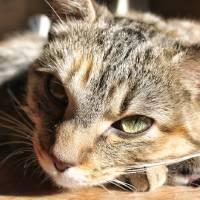 Cat Face in Sun by Through The Split Window