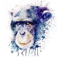 Watercolor Chimpanzee