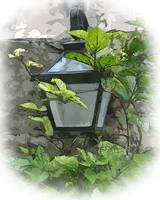 Yard Lamp And Vine