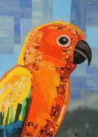 Orange Conure