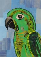Conor the Green Conure