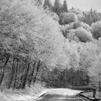 Winter in the Great Smoky Mountains by Donnie Shackleford