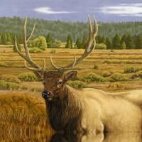 """Elk-24x30-FINAL-wrap"" by Tim"