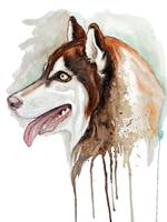 Brown Husky Profile Portrait