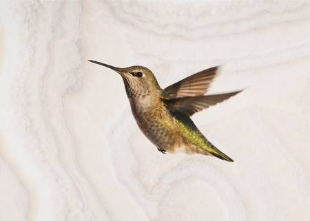 Fine Feathered Hummingbird in Flight with Stone Te