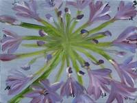 August Agapanthus