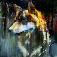 Abstract Wolf Portrait