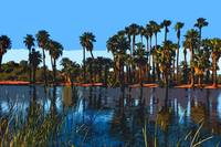 The Palms At Papago Park by Kirt Tisdale
