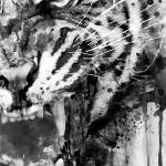 Half-Faced Angry Tiger (BW) Prints & Posters