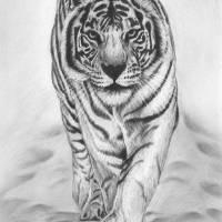 White Tiger Art Prints & Posters by mandy boss