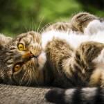 Lazy Cat Prints & Posters