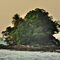 Island With Trees Art Prints & Posters by Joao Ponces de Carvalho