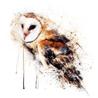 Barn Owl Watercolor Painting Art Prints & Posters by Marian Voicu