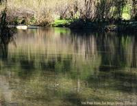 Tres Pinos Creek in Spring