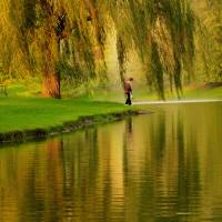 """""""Weeping Willow Tree Nature Landscape Scene"""" by PhotographsByCarolFAustin"""