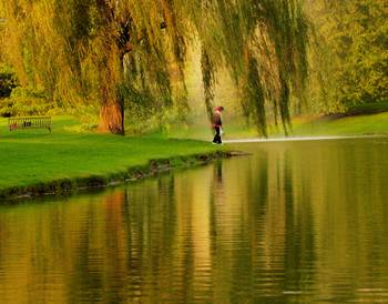 Weeping Willow Tree Nature Landscape Scene By Carol F Austin