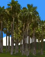 Palm Tree Grove by Kirt Tisdale