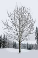 Abstract Snow Covered Tree by Kirt Tisdale