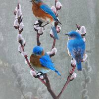Bluebirds and Pussy Willow Art Prints & Posters by I.M. Spadecaller