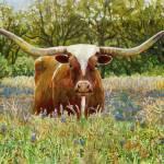 Texas Longhorn Prints & Posters