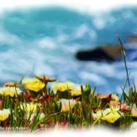 Oil- Pacific Coast Garden_DSC03992 Art Prints & Posters by Jack Huber