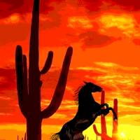 Stallion at Sunset Art Prints & Posters by Dave Gafford