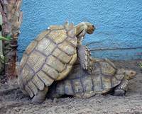 Turtle Style
