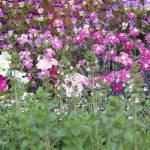Flower Medley by Deanne Flouton
