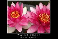 Water Lilies Black Poster